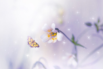 Wall Mural - Blooming stellaria holostea macro flowers and flying butterfly on fantasy mysterious spring background with shining glowing stars, fabulous fairy tale floral garden, soft focus, artistic toned image.