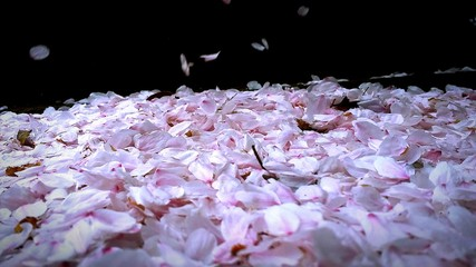 High Angle View Of Cherry Blossom Petals On Field