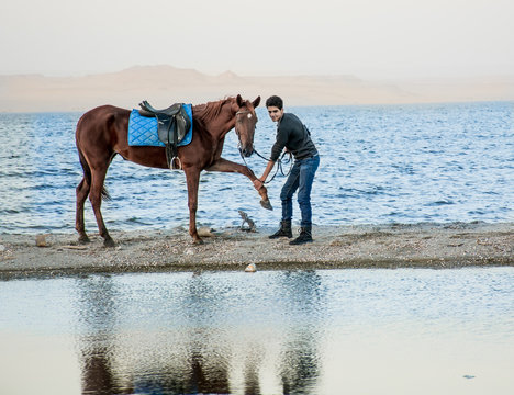 Horse hand shaking in beach
