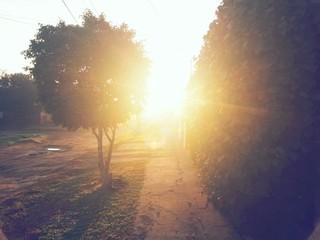 Foto auf Gartenposter Cappuccino Trees On Landscape At Sunset