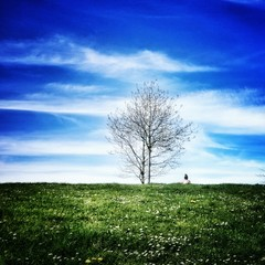 Foto auf AluDibond Dunkelblau Lone Tree On Countryside Landscape Against The Sky