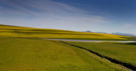Wall Murals landscape with canola