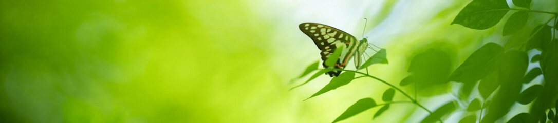 Keuken foto achterwand Lime groen Beautiful nature view of butterfly on blurred background in garden with copy space using as background natural animal landscape, fresh cover page, butterflies day concept.