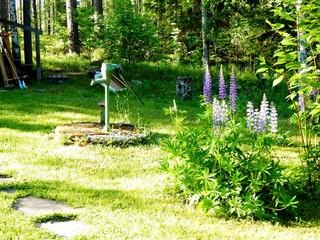 Foto auf Gartenposter Gelb Schwefelsäure Trees On Countryside Landscape