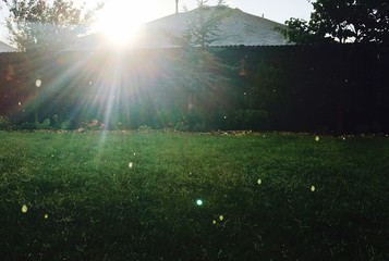 Wall Murals UFO Sun Shining Through Trees On Grassy Field
