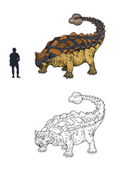 Ankylosaurus compared to human. Comparison between dinosaur and human. Dino coloring page.