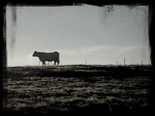 Zelfklevend Fotobehang Schapen Cow On Grassy Field Against Sky