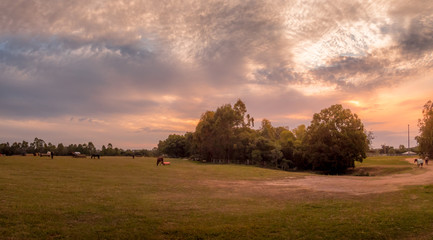 Panoramic Horse Paddock Afternoon