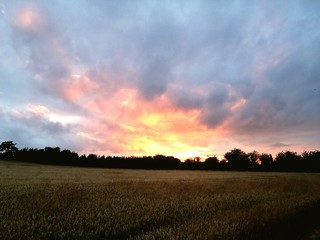 Wheat Growing On Agricultural Field Against Cloudy Sky During Sunset Fototapete