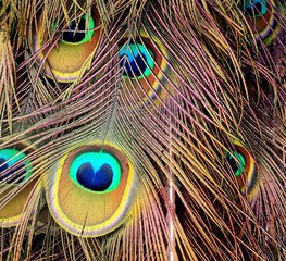 Papiers peints Paon Close-up Of Peacock Feathers