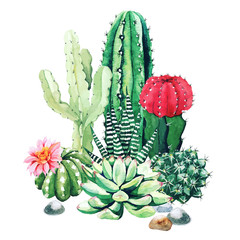 Fototapeta Composition of watercolor cactus plants and succulents obraz