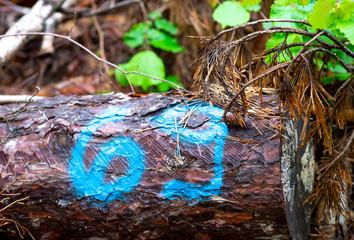 Sculure di gnomi nel bosco