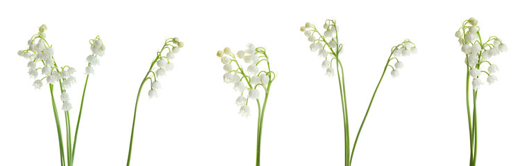 Collage with beautiful lilies of the valley on white background. Banner design