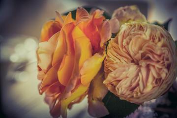 Fotobehang Close-up Of Rose