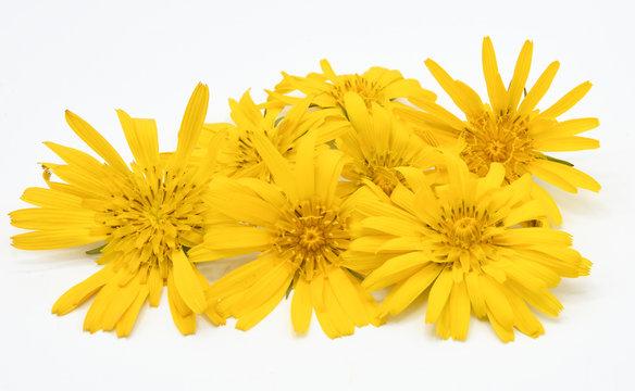 fiori gialli petali arnica margherite composizione