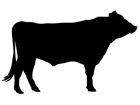 黒毛和牛シルエット_1