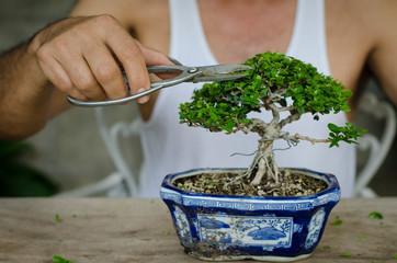 Man pruning a bonsai whith scissors