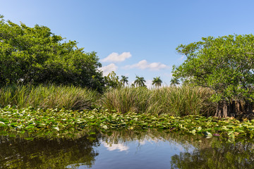 Florida wetland, Airboat ride at Everglades National Park in USA. Popular place for tourists, wild nature and animals. Lily Pads in the foreground.
