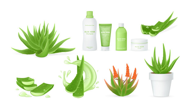 Aloe vera realistic set with fresh drops of water, medicinal plant leaves cut pieces with juice drops.
