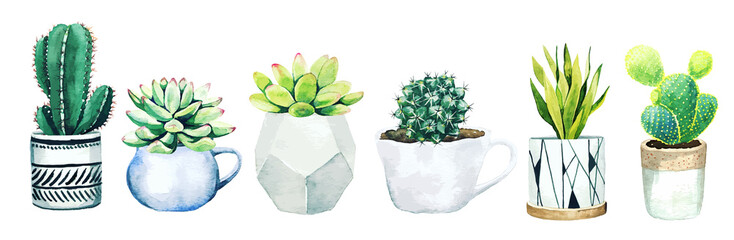 Set of six potted cactus plants and succulents, hand drawn vector