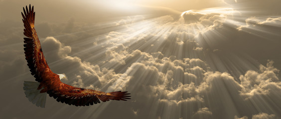 Fototapete - Eagle in flight above the clouds