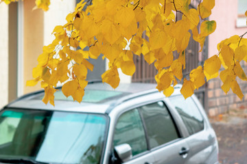 silver suv on the pavement. autumn weather with yellow foliage. legendary awd vehicle
