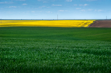 Yellow oilseed rape fields and green meadows of winter wheat, arable land, patchwork, lines and...