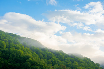 fog and mist above the forest. beautiful morning nature in mountains. landscape with clouds on the sky at sunrise. tranquil wonderland in summer