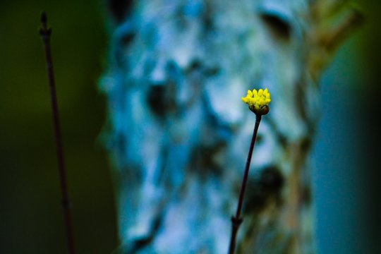 Yellow Wildflower In Front Of Tree