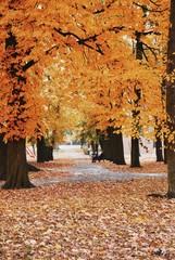 Foto op Canvas Begraafplaats Trees In Park During Autumn