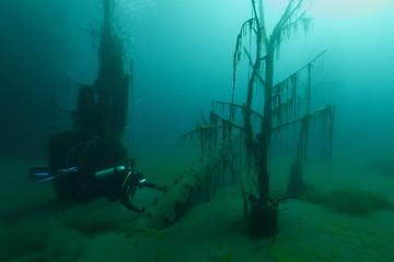 underwater scene with diver in underwater forest