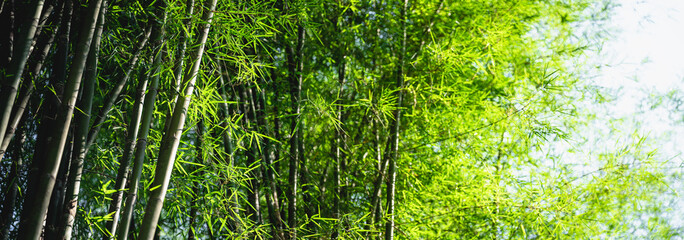 Tuinposter Bamboo Bamboo tree bamboo forest green nature