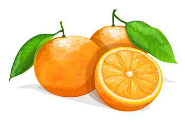 Two oranges with slice isolated on white background. Vector illustration