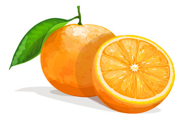 One orange with half  isolated on white background. Vector illustration