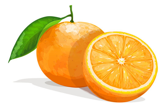 One orange with half  isolated on white background. Vector illustration