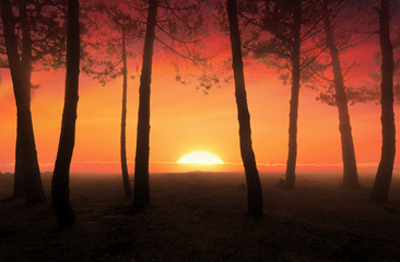 beautiful forest at sunrise with big sun at the background