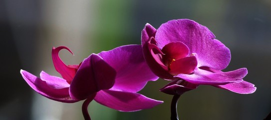 Close-up Of Pink Orchids Blooming On Field