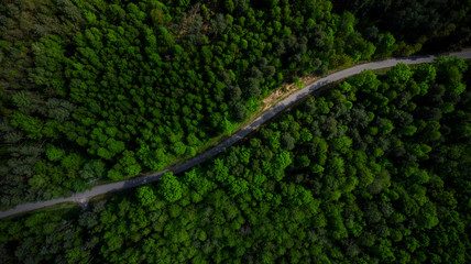 Winding Road in Pine Forest At Spring. Aerial Drone Top Down View