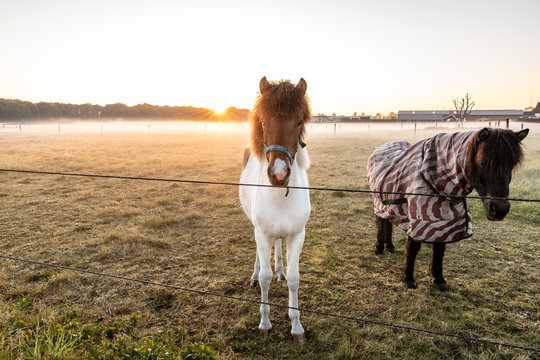curious horses looking around at sunrise. low hanging mist with beutiful light. wanderlust inspiration