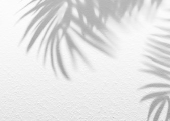 White gray grunge cement texture wall leaf plant shadow background.Summer tropical travel beach with minimal concept. Flat lay palm nature. Wall mural