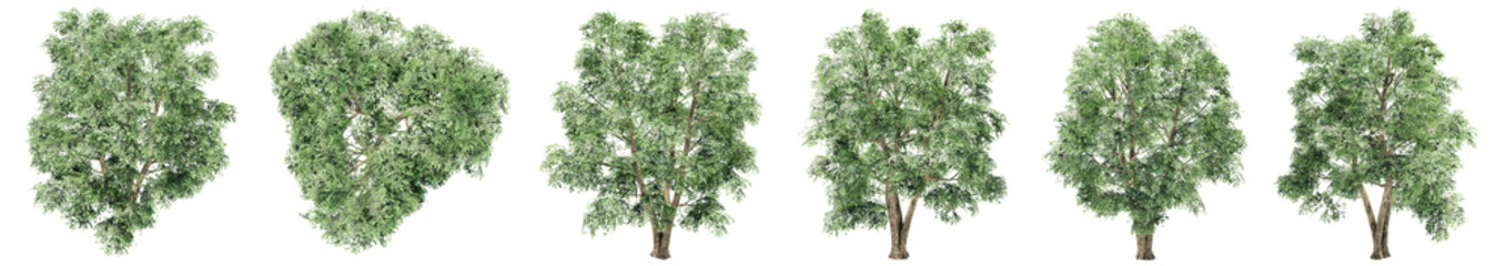 Foto auf Gartenposter Olivgrun Set or collection of green elm trees isolated on white background. Concept or conceptual 3d illustration for nature, ecology and conservation, strength and endurance, force and life