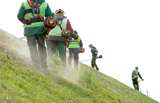 Professional landscapers team workers cutting grown green grass on inclined slope with petrol string trimmers. Lawn care with brush cutters
