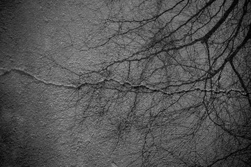 Fototapeta Close-up Of Bare Branches