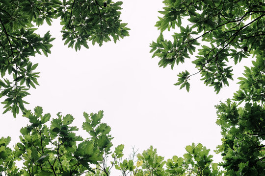 Lush green leaves in deep forest in springtime