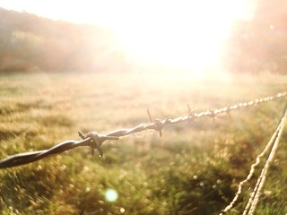Close-up Of Barbed Wire Fence On Grassy Field