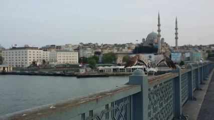 Fotomurales - Seagull on the Galata Bridge in Istanbul