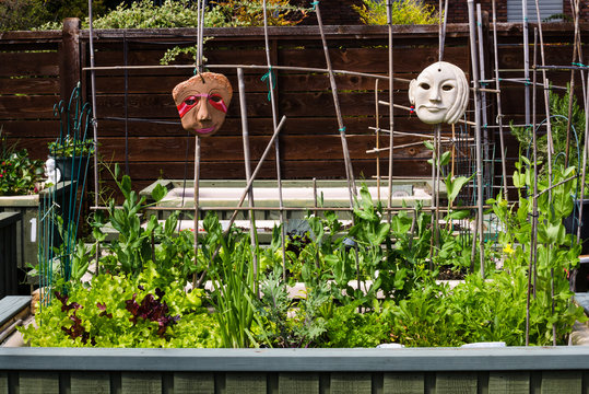 A community garden with a selection of healthy green vegetables is created from old bathtubs set up for its residents in the parking lot of an apartment complex.