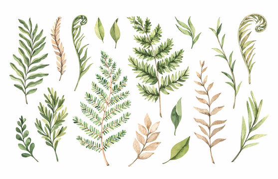 Botanical watercolor clipart. Set of Green leaves, fern, herbs and branches. Vector illustrations. Floral Design elements. Perfect for wedding invitations, greeting cards, blogs, posters, logo