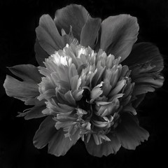 Fotobehang Close-up Of Flower Blooming Outdoors