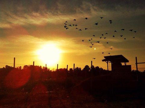 Sunset With Flock Of Birds Flying Against Sky